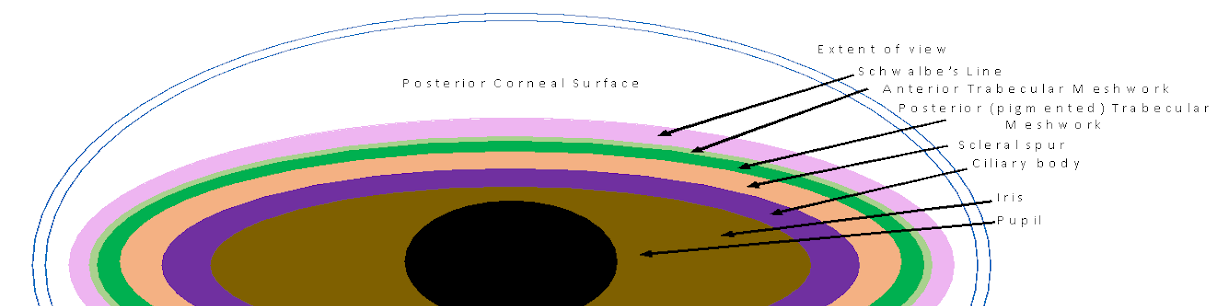 labeled gonioscopy angle.png